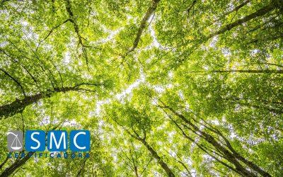 Qual importância de um sistema de gestão ambiental, ISO 14001, em uma empresa?